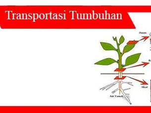 Sistem-transportasi-pada-tumbuhan-jenis-jaringan-mekanisme