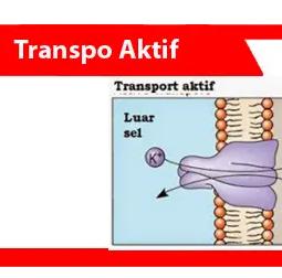 Transpo-Aktif-definisi-fungsi-properti-tipe-contoh