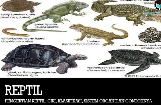 pengertian-reptil