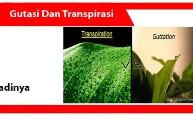 Gutasi-dan-Transpirasi-definisi-fungsi-faktor-proses